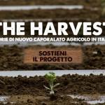 The Harvest. Storie di nuovo caporalato agricolo in Italia
