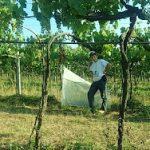 Assistenza tecnica agroecologica