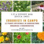 Erboristi in campo: le piante officinali in Agricoltura Organica e Rigenerativa